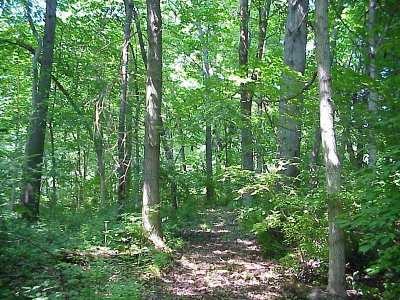 Jackson Residential Lots & Land For Sale: Wiggins Rd