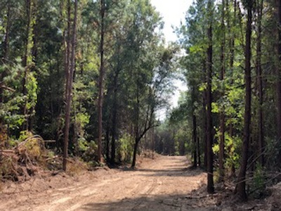Brandon Residential Lots & Land Contingent/Pending: Hwy 43