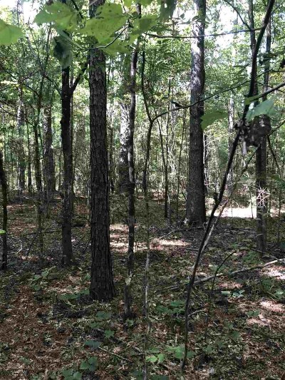 Canton Residential Lots & Land For Sale: Grown Williams Rd