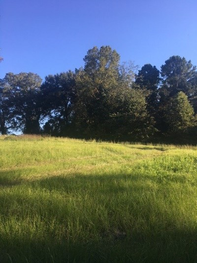 Residential Lots & Land For Sale: Hwy 49 North