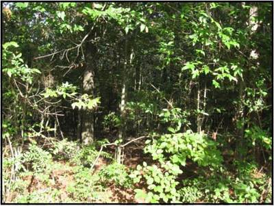 Clinton Residential Lots & Land For Sale: Magnolia Rd