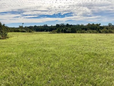 Carthage MS Residential Lots & Land For Sale: $179,900