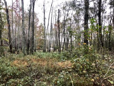 Carthage MS Residential Lots & Land For Sale: $94,500