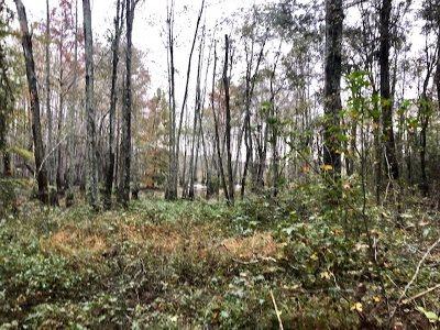 Leake County Residential Lots & Land For Sale: Van Buren St