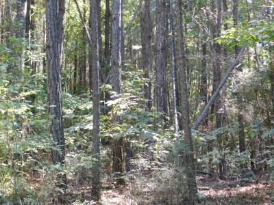 Ridgeland Residential Lots & Land Contingent/Pending: Greens Crossing Rd