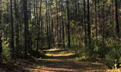 Neshoba County Residential Lots & Land For Sale: W Tucker Circle