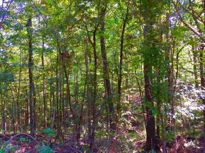 Woodville Residential Lots & Land For Sale: Hwy 563
