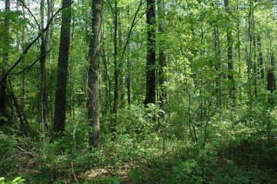 Water Valley MS Residential Lots & Land For Sale: $98,000