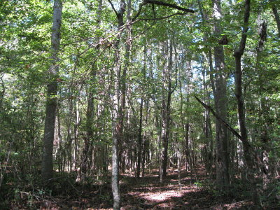 Woodville Residential Lots & Land For Sale: Highway 24 W