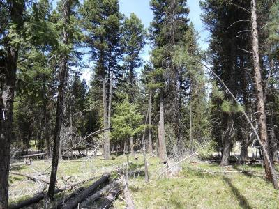Missoula County Residential Lots & Land For Sale: 1274 Grandview Dr, Seeley Lake