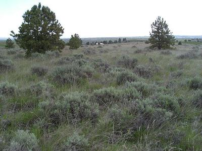 Yellowstone County Residential Lots & Land For Sale: Creekmore Loop