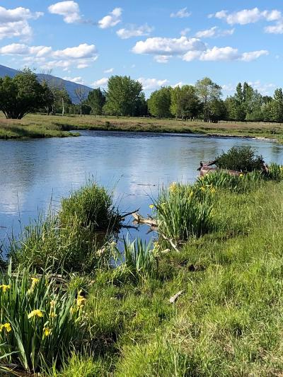 Ravalli County Single Family Home For Sale: 2875 Eastside Hwy