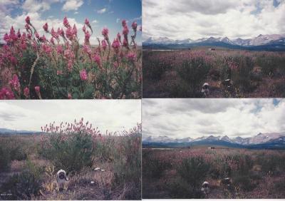 East Glacier Park Residential Lots & Land For Sale: E Montana Hiway #2