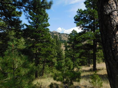 Cascade  Residential Lots & Land For Sale: Ordway Dr. #4