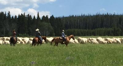 Cascade County, Lewis And Clark County, Teton County Farm For Sale: 615 Belt Park Road
