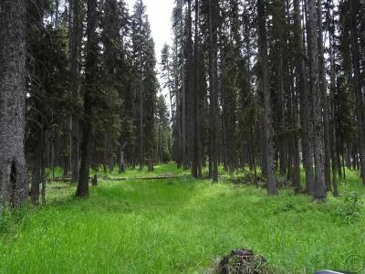 Seeley Lake Residential Lots & Land For Sale: B1 Enchanted Forest Road