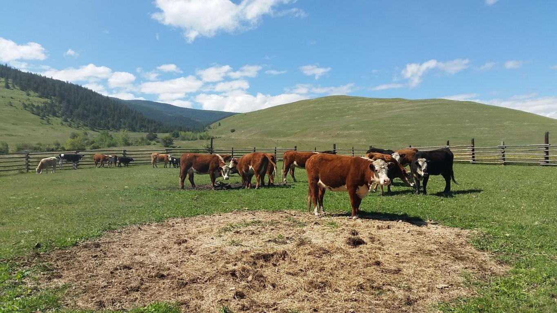Montana sanders county dixon - Property Photo Property Photo