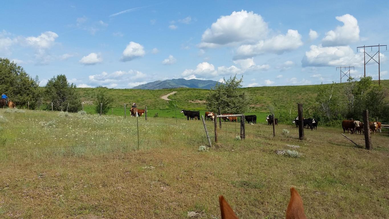 Montana sanders county dixon - Property Photo Property Photo Property Photo