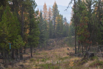 Marion Residential Lots & Land For Sale: Nhn Wild 40