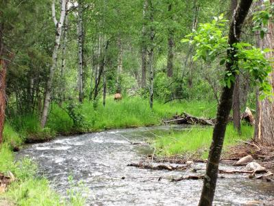 Darby Residential Lots & Land For Sale: Nhn Chief Joseph Trail