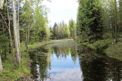 Seeley Lake Residential Lots & Land For Sale: Boy Scout Road