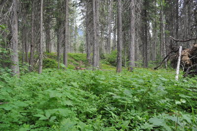 Flathead County Residential Lots & Land For Sale: 14750 Us-2