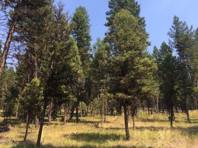 Missoula County Residential Lots & Land For Sale: 140 Evergreen Drive