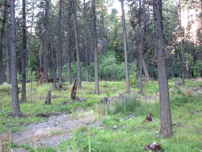 Kalispell Residential Lots & Land For Sale: Nhn Rocky Point Road