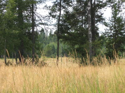 Whitefish Residential Lots & Land For Sale: 188 Brimstone Drive