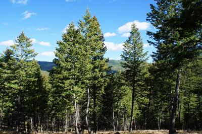 Flathead County Residential Lots & Land For Sale: 246 Forest Ridge Trail