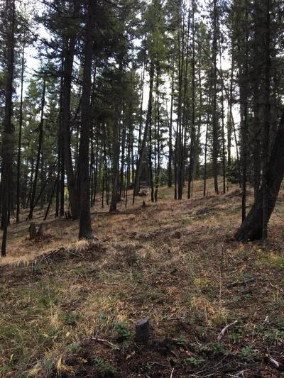 Seely Lake, Seeley Lake Residential Lots & Land For Sale: 379 Pyramid Loop
