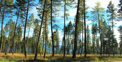 Flathead County Residential Lots & Land Under Contract Taking Back-Up : 1243 Timber Ridge Court