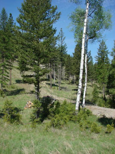 Lincoln County Residential Lots & Land For Sale: Nhn Eureka Hills