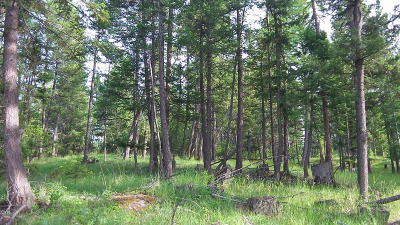 Kalispell Residential Lots & Land For Sale: 194 Walking Coyote Drive