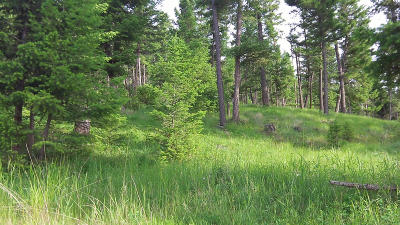 Kalispell Residential Lots & Land For Sale: 148 Walking Coyote Drive