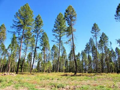 Flathead County Residential Lots & Land Under Contract Taking Back-Up : 1109 Timber Ridge Court
