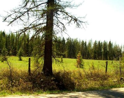 Columbia Falls Residential Lots & Land For Sale: 2220 Tamarack Lane