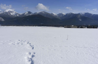 Kalispell Residential Lots & Land For Sale: 17 Whitetail Meadows Road