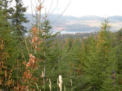 Whitefish Residential Lots & Land For Sale: 124 Huckleberry Lane