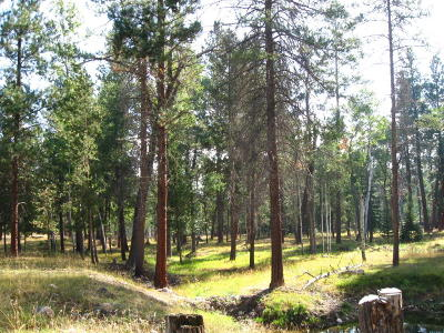 Darby Residential Lots & Land For Sale: 266 Chief Joseph Trail