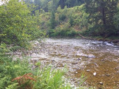 Alberton, Saint Regis, Huson, Heron, Noxon, Paradise, Superior, Thompson Falls, Trout Creek Residential Lots & Land For Sale: Nhn Conifer Lane