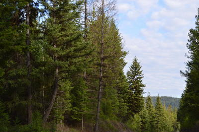 Lincoln County Residential Lots & Land For Sale: Nhn Sunday Mountain Road