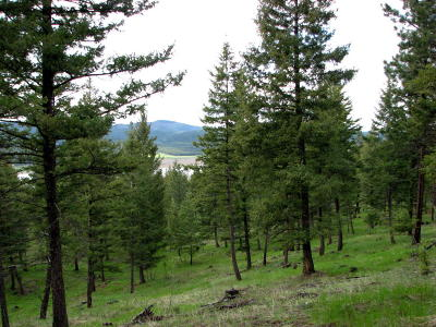 Kila Residential Lots & Land For Sale: Nhn Wapiti Ridge