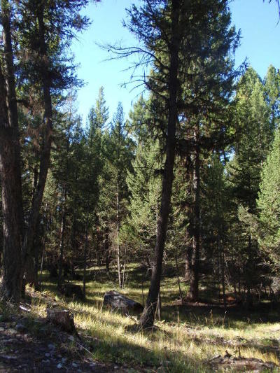 Missoula County Residential Lots & Land For Sale: Nhn Grandview Lane