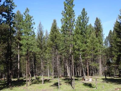 Missoula County Residential Lots & Land For Sale: 1245 Grandview Drive