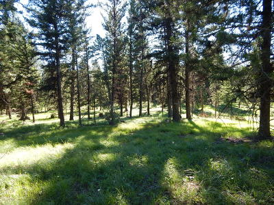 Seely Lake, Seeley Lake Residential Lots & Land For Sale: Lot 230 Montana Drive