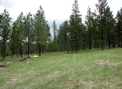 Kila Residential Lots & Land For Sale: Parcel B Wapiti Ridge