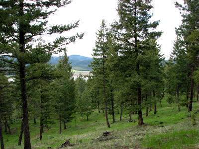 Kila Residential Lots & Land For Sale: Parcel D Wapiti Ridge
