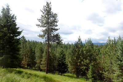 Missoula County Residential Lots & Land For Sale: 19357 Houle Creek Road