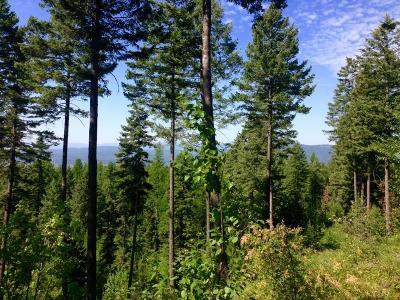 Whitefish Residential Lots & Land Under Contract Taking Back-Up : 968 Northwoods Drive